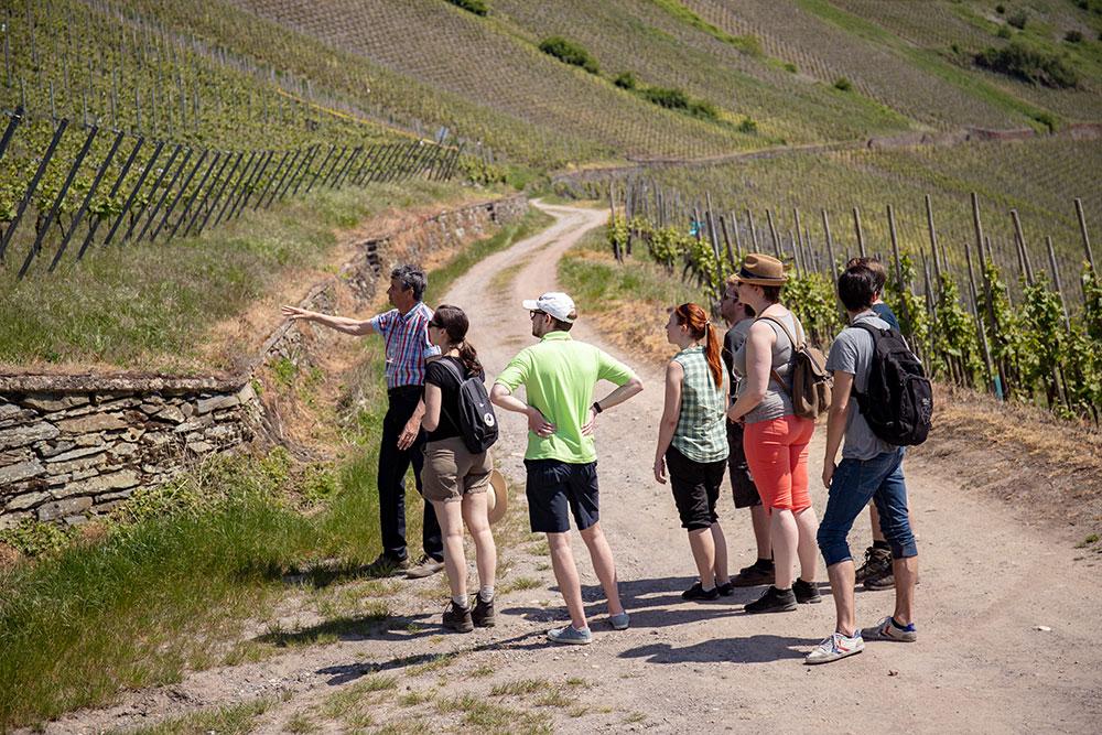 Weinwandern Aufstieg