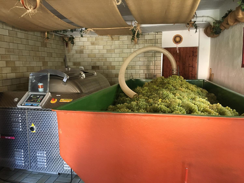 Weingut Alfred Frick Mehring Traubenlese 2020